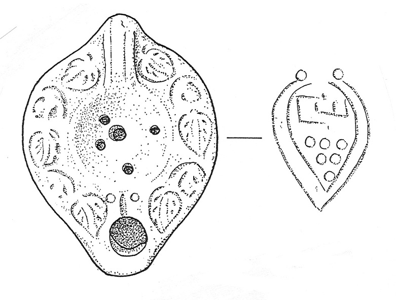 Archaeological Illustration Artifact Drawings